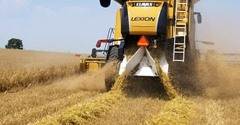 2018 Oats harvest